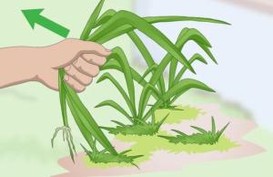 آموزش کاشت درختان پاییزی