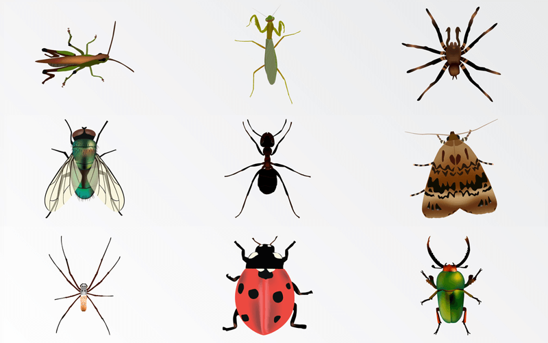 درمان خانگی خارش و التهاب نیش حشرات