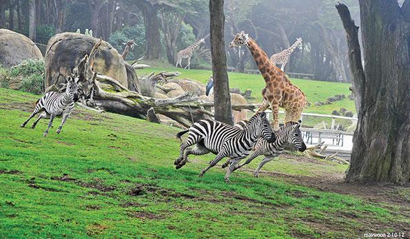 تعبیر خواب باغ وحش + تعبیر خواب حیوانات در باغ وحش