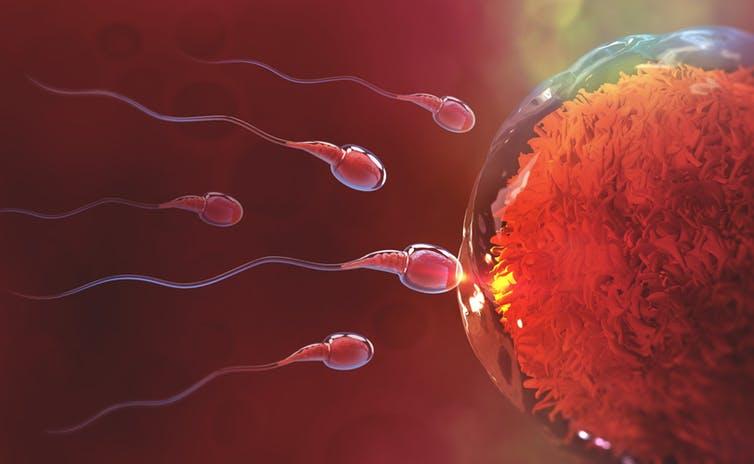 تاثیر آب میوه و نوشابه بر روی کیفیت اسپرم