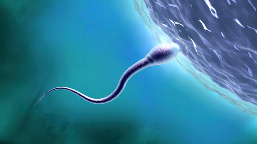 مدت زمان تشکیل اسپرم