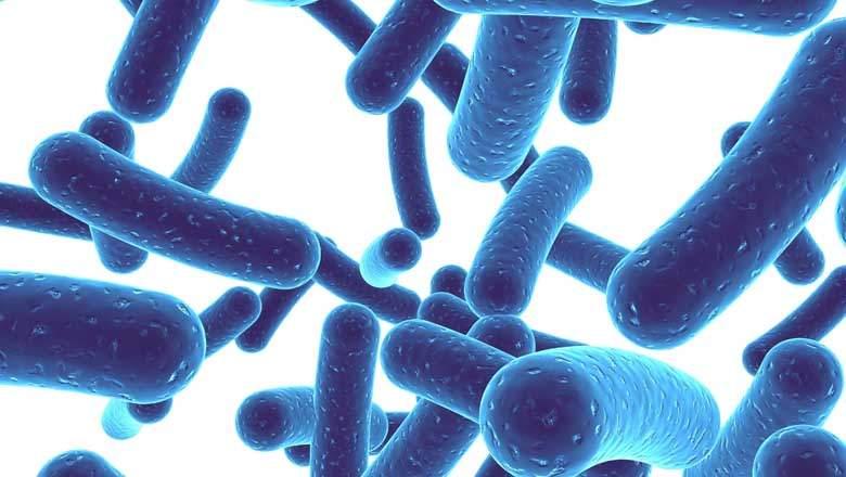درمان زخم معده با پروبیوتیک ها
