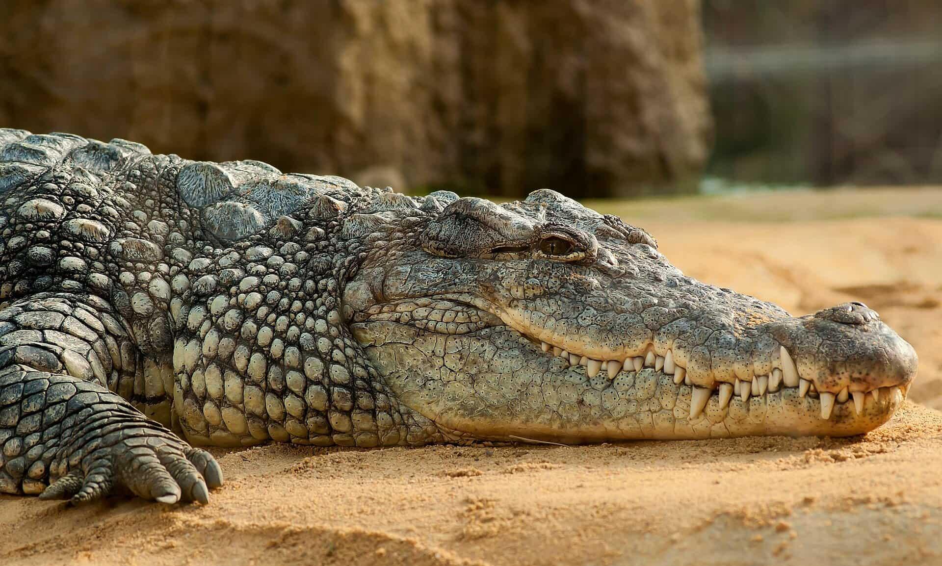 تعبیر خواب کروکدیل و تمساح